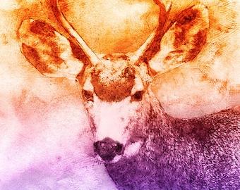 Original Digital Art Deer