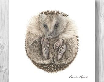 "Giclee Art Print - ""Tiggy"" the hedgehog"