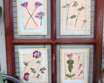 Botanical Art: Window Flowers