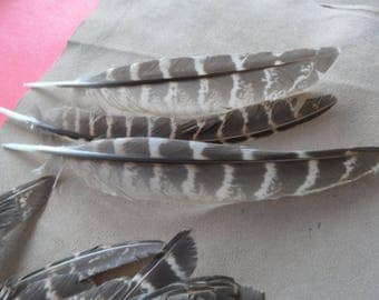 "3 ""Eagles"" wings Colchis, good quality pheasant feathers!"