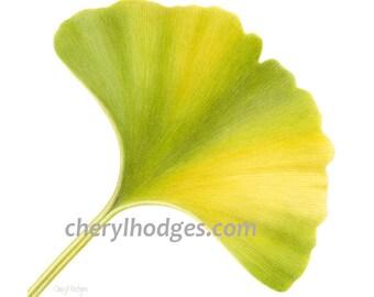 Ginkgo biloba leaf print