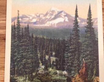 Vintage Postcard-1950's Glacier National Park