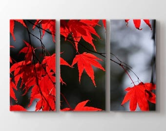 Large Wall Art Canvas Print - Red Leaves on Tree in Autumn