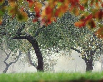 Tree Art, Fine Art Photography, Nature Photo Print, Fog Photography, Fine Art Print