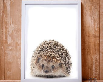 Hedgehog Print, Hedgehog Decor, Woodlands Animal Wall Art, Animal Print, Hedgehog Photo, Animal Decor Baby Gift, Art Print