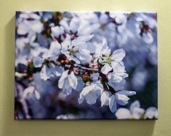 White Cherry Blossom Canvas