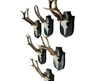 six deer trophies on plaques from palace salem - germany