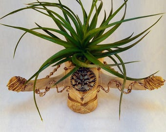 Vertebrae Air Plant Holder