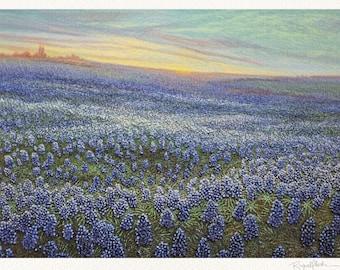Bluebonnets Wildflower Fine Art Print