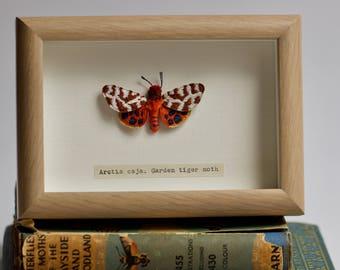 Hand embroidered Garden Tiger Moth