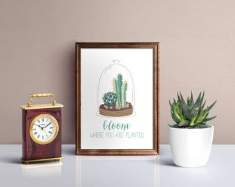 Bloom, cactus, Home Print, A4 or A5, Quality Paper