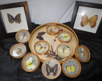 Beautiful Collection 13 REAL butterflies, framed & coaster/tray