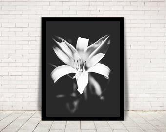 Blank and White Flower