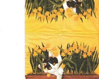 Towel cat in flowers tray