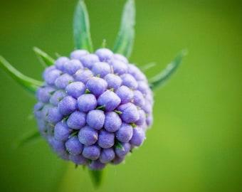 Purple flower print, nature photography, digital download, photo art print, home decor, modern art