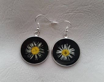 Round earrings 2.5 cm in resin and dried daisy flowers