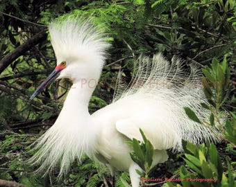 Egret, Canvas