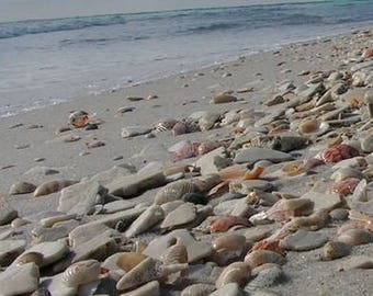 Sand, Shells, & Stones