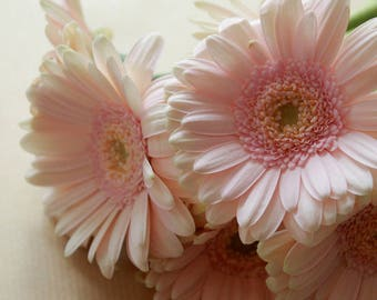 "Color photography ""Crown of gerbera"""