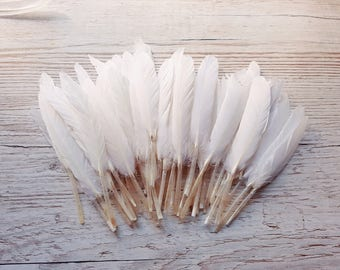 Set of 10 long white feathers