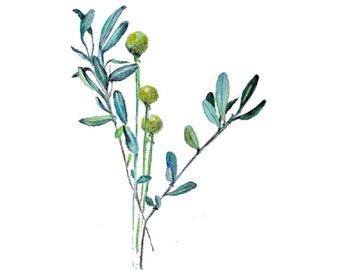 Aquarelle, Tableau peinture, aquarelle fleur, aquarelle, original, fleur, botanique, vert, jaune, pour sous-verre