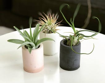 SET OF THREE Mini Cement Air Plant Holders  Pink, White or Charcoal Plants not included