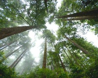 Tree Photography, print, Heart tree photo, Home Decor, Landscape photo, Wall art, download, Nature art, Forest photo, Fog tree, Tree canopy