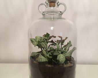Demijohn terrarium