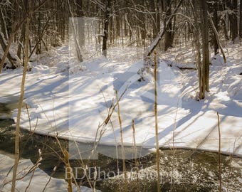 Quiet Winter Stream | Nature Photo Art | Nature Lover Gift | Fine Art Photography | Personalization | BDPhotoShoppe | Home Office Decor