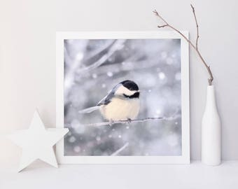 Bird in Snow Fine Art Print, Animal Photography Print, Bird Photography, Winter, Bird Photo, Nature Photography, Chickadee in Snow No. 11
