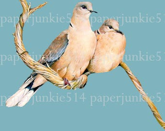 Dove Printable Clip Art  - Dove - Digital Download  PNG Image - Illustration