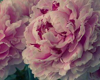 Peony Print,  Pink Flower Wall Decor, Floral Art Print, Flower Photography, Peony Wall Art, Peony Photo, Peony Artwork, Floral Art