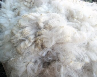 Soft Alpaca Fiber Off White Half Pound Washed Four Inch Locks Spin Felt Nice Loft Lovely Spinning Fiber My Farm Felting Fiber Crimp