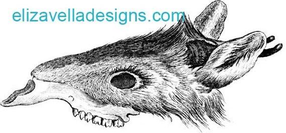 animal anatomy rat mouse skeleton printable art digital download image graphics clipart png clip art vintage art digital stamp