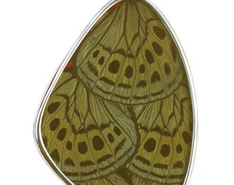 XXL Sage Green Asterope Leprieuri Butterfly Wing Pendant