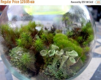 Save25% Terrarium kit-DIY Large Moss & lichen kit-FEATURED in 2015 Blog cabin in the 50 states of Etsy-Build your own-FREE Moss Care Book