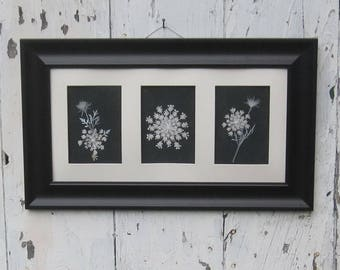 Real Queen Annes Lace collage, 10x20, in 2.5 inch black frame