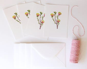 Matchstick Banksia Illustrated 4 Pack - A6 Flora Postcards With Envelopes