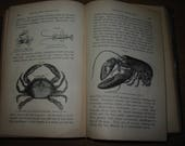 A Manual of Zoology 1869 Antique Zoology Book 500 Illustrations Old Zoological Text The Animal Kingdom of North America Natural History