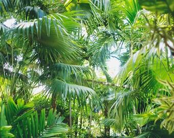 Tropical Plants - Fine Art Photograph, Nature Photography, Summer, Florida, Room Decor, Wall Art