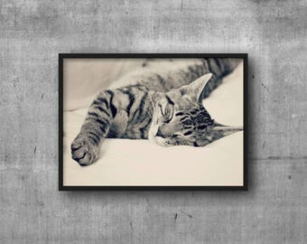 Sleeping Kitten Photograph - Digital Download - Printable Cat Photo - Cat Photography - Cat Lovers Crazy Cat Lady - Forrest the Cat