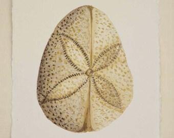 Sand dollar urchin original watercolour sea shell painting ocean beach series illustration