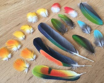 SET of Rainbow Parrot Feathers