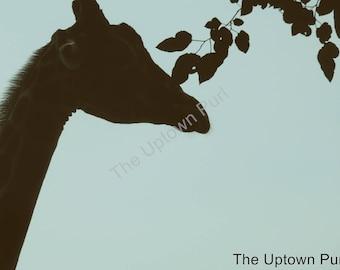Giraffe Silhouette Photo Print