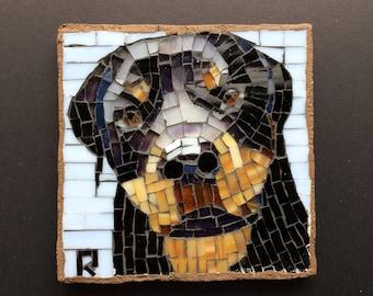 Dog Pet Portrait Rottweiler 1009