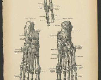 4 Vintage 1880 Human Anatomy Lithograph Print Foot, Ankle, Bones, Tendons, Arteries