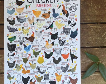 "Chicken Breeds - Art Print - 8x10"", 11""x14"", 18""x24"" - Wall Art - chickens, animals, outdoors, nature, farm, gift, home decor, country"