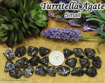 Turritella Agate (small) tumbled stone for crystal healing