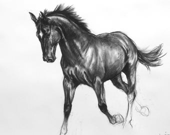 Equine art horse art LE mounted art print horse gift horse lover gift wall art 'Black III' from an original charcoal sketch drawing