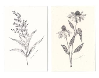 Mystery Botanical Print Pack of 10